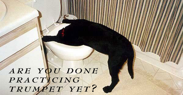 it's just a large water bowl!